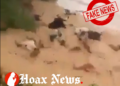 Cows getting washed away